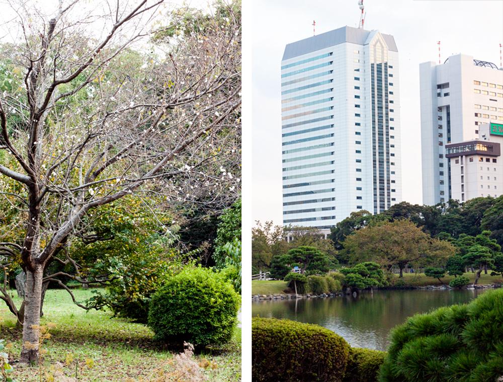 Hama-rikyu Gardens5