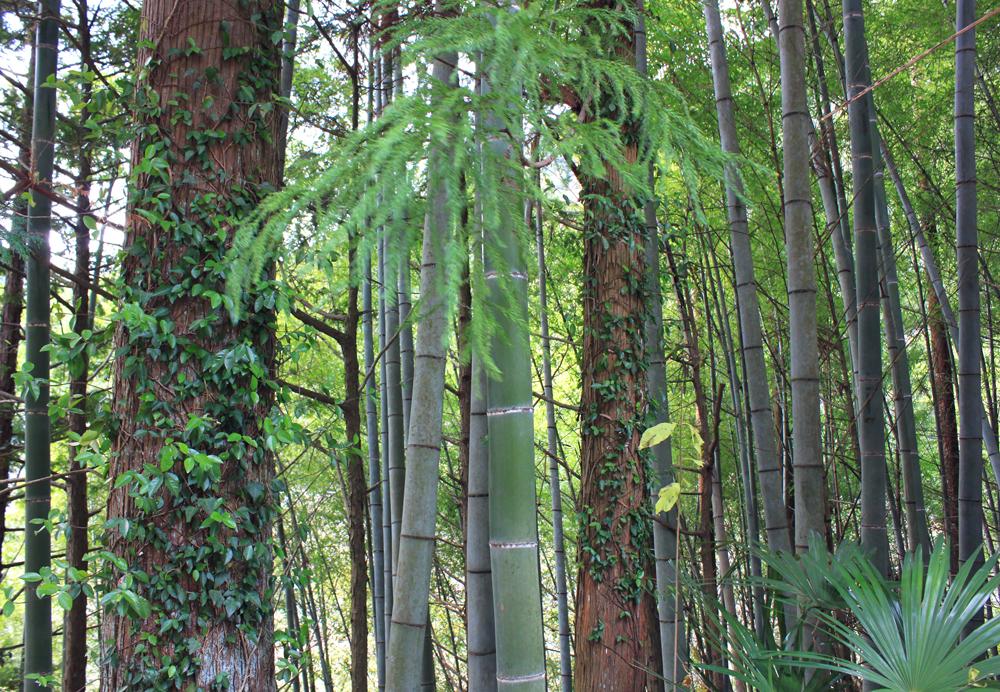 bamboo, Otama walking trail, japan hiking, okutama city, kori station, tokyo, fall colors, japan nature