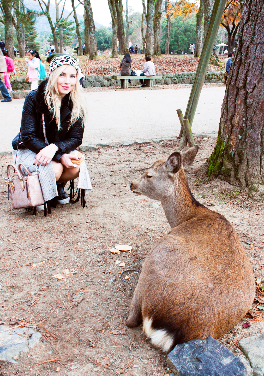 Nara, Japan, Nara Park Japan, Nara park deer, tame deer, japan deer, deer sightseeing, deer park, nara koen, japan touristing, japan sightseeing